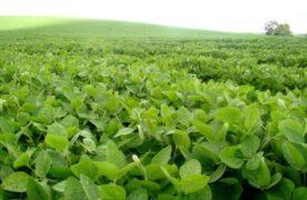 Por la soja, el campo lidera las exportaciones argentinas de energía, por primera vez en la historia