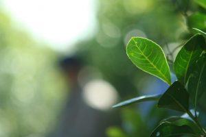 Eldorado: se realizará la jornada de divulgación Científica de Producción de Yerba Mate