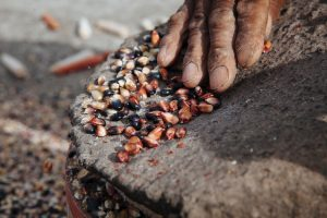 Kaapuera presentó proyecto de ley para proteger semillas nativas y criollas y cultivos tradicionales