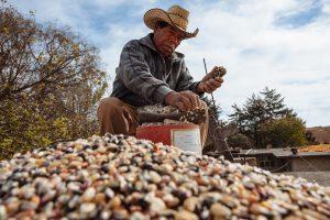 Preocupación de la FARM por el avance en Misiones del acuerdo entre Agricultura de Nación y MAIZAR
