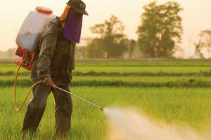 Los pesticidas, culpables de 200.000 muertes al año