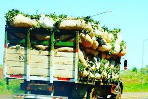 «La yerba es el commodity que mejor sabemos hacer»
