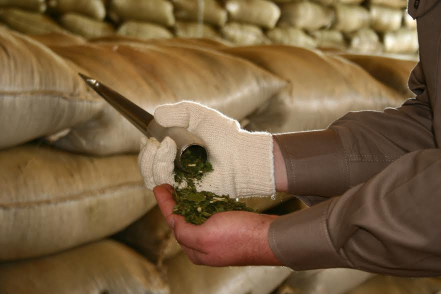 Desde el INYM explican el nuevo método de control de la yerba mate