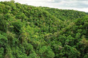 Estudian alternativas para potenciar el «empleo verde» en Misiones