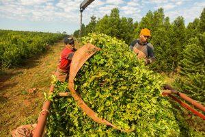 La firma también se dedica a la administración de campos y producción de yerba.