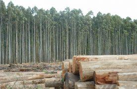 El sector forestal exige derogar leyes y el acceso a más tierras productivas