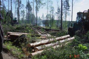 Agroindustria convoca a exportadores de productos de base forestal a participar del Seminario «Madera Argentina para el Mundo»