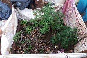 """Detienen al """"florista"""" y descubren un invernadero de droga"""