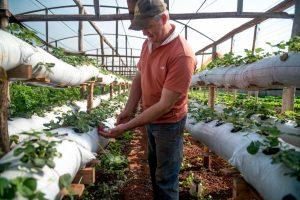 A través de la REAF se continúa dando impulso a los agricultores familiares