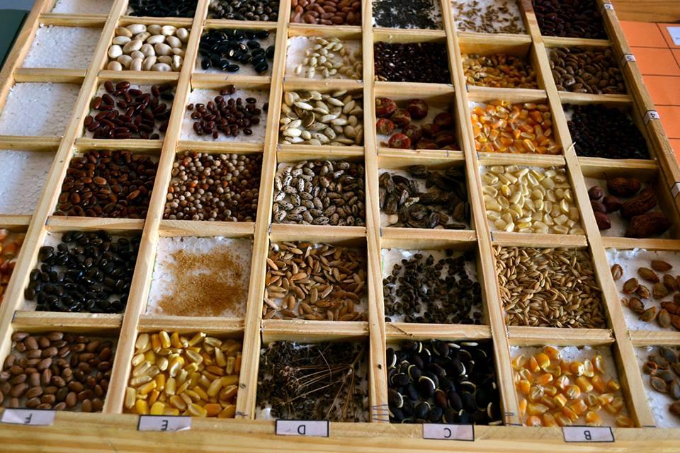 La Facultad de Agronomía de La Plata fundamentó su oposición al proyecto de la Ley de Semillas