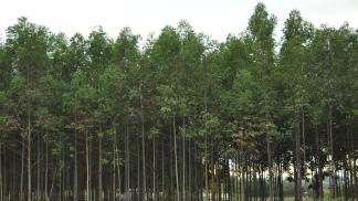 Macri incluyó la prórroga de la ley 25080 de Bosques Cultivados en la convocatoria a sesiones extraordinarias del Congreso
