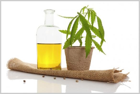 """Quieren que Misiones se convierta en Productora Legal de """"aceite de cannabis"""" de alta calidad"""