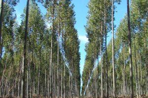 Actualización de costos para inversiones de bosques cultivados