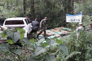 Decomisan más de 2.490 kilos de marihuana acondicionados en dos camionetas