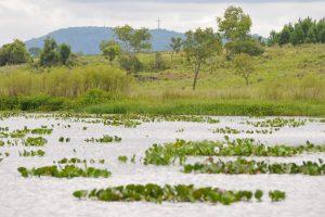 Yacyretá quiere replicar en Campo San Juan un programa de reintroducción de especies