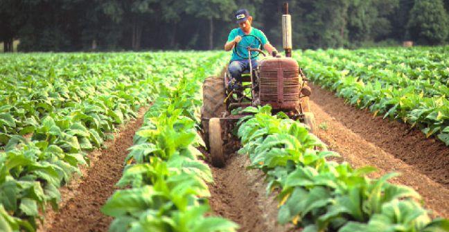 Alertan que con la reforma Tributaria, los tabacaleros perderían categoría del Monotributo Social