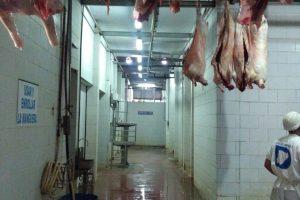 Las  provincias del Nea buscan mejorar la cadena de la carne ovina