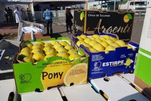 Detrás de los limones, Misiones quiere ingresar con mandarinas al mercado de Estados Unidos