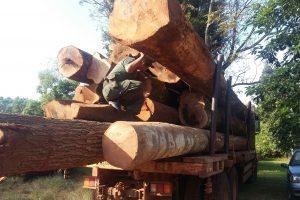 Agentes forestales retienen camion con madera nativa con documentacion adulterada