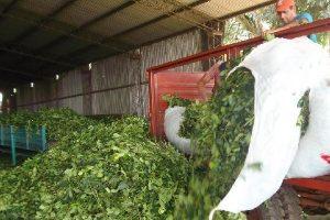 Fortalecen la trazabilidad de las semillas de yerba mate