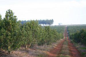 El INYM realiza un minucioso relevamiento de plantacionescon su Sistema de Información Geográfica