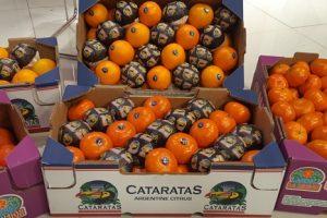 Mandarinas misioneras en Brasil, se consolida un negocio que tardó diez años en reactivarse