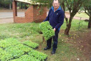 A plantar árboles: Comenzó la distribución de plantines del Plan Leña