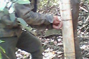 Guardaparques destruyen saleros y cebados en el parque Salto Encantado