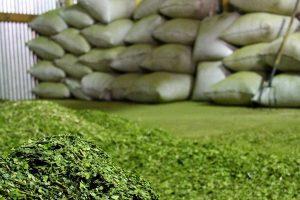 La yerba y el té se salvan de una brutal caída de la industria