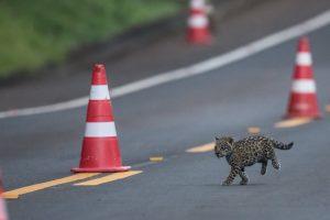 Tiene media sanción el proyecto para establecer el día nacional de las especies amenazadas