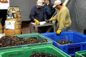 """""""Exponen mal a Pymes regionales de alimentos y bebidas"""", alerta Funes de Rioja"""