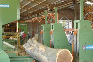 La Facultad de Forestales de la UNaM formará técnicos universitarios para industrias de aserrío