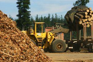 La Nación reconoció deuda forestal, pero solo pagará 80 de los 400 millones