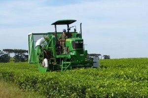 De Oberá a Kenia exportando tecnología para la cosecha del Té