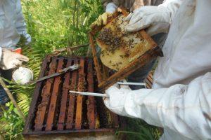 El IFAI ofrece un curso sobre manejo integral de la apicultura