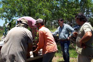Entregan plantines de cítricos a 80 familias del barrio El Porvenir de Posadas