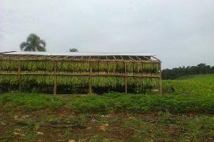 Agro informó que ya están depositados los fondos de los kits de techos para tabacaleros