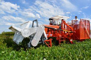 El futuro ya llegó a la yerba mate: presentaron una cosechadoramecánicahecha en Misiones