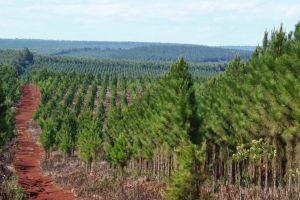Se promulgó la prórroga de la Ley 25.080 «de inversiones para los bosques cultivados»