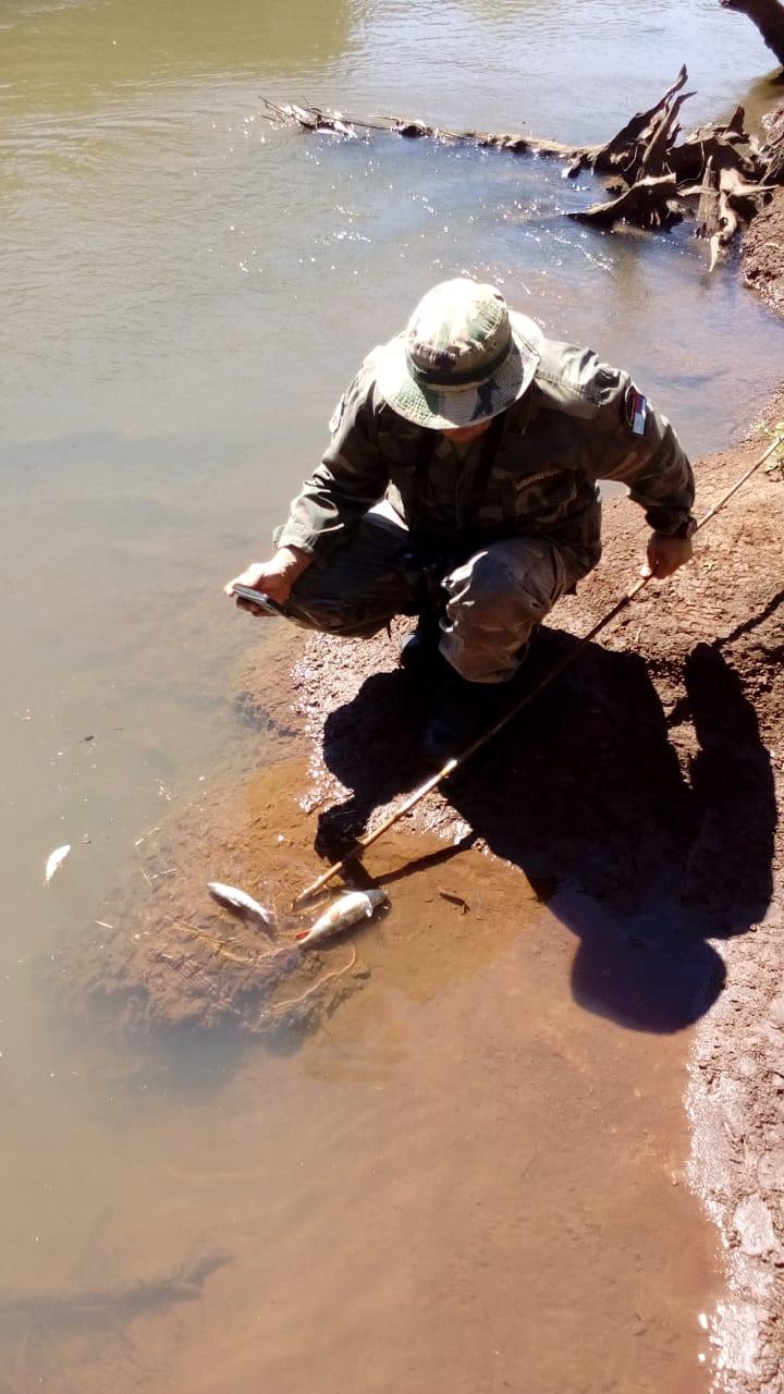Ecología constató la muerte de al menos 200 peces en el arroyo Urugua-í