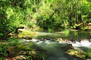 Vida Silvestre y propietarios privados protegen más de 5.100 hectáreas de monte nativo en San Pedro y Bernardo de Irigoyen