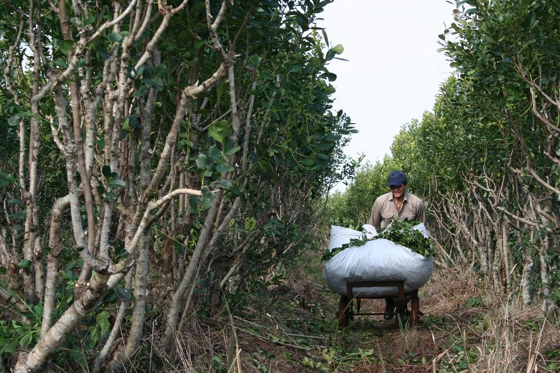 Las BPA, también en Montecarlo, para certificar alimento sano y de calidad