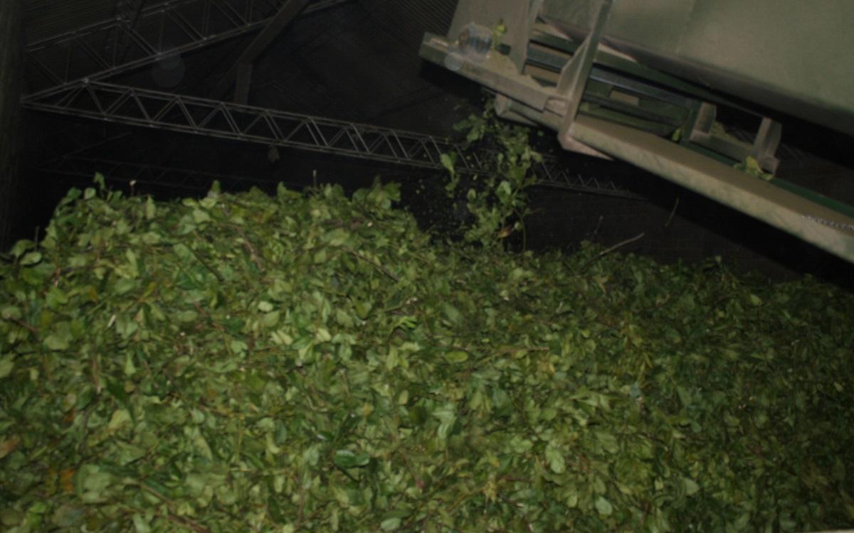 El INYM clausuró un secadero que no estaba habilitado para procesar yerba mate