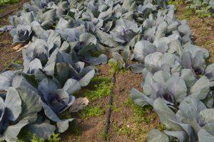 Argentina se posiciona a nivel mundial con la producción orgánica