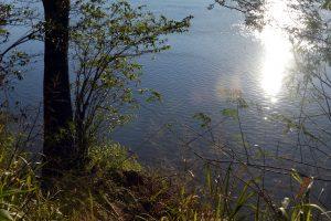 Se impulsa la revalorización de Monte Seguin, única protección de Selva ribereña