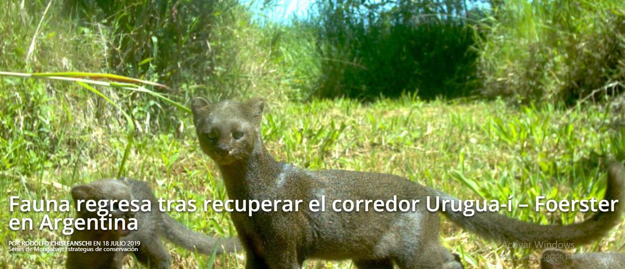 La fauna regresa tras recuperar el corredor Urugua-í-Foerster en Misiones
