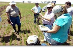 Malezas: ante la creciente ineficacia de los herbicidas se sugiere la alternativa agroecológica