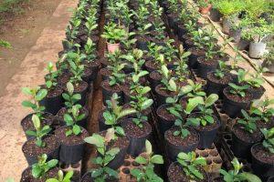 En marcha, el primer vivero en implementar el Manual de propagación vegetativa de plantines
