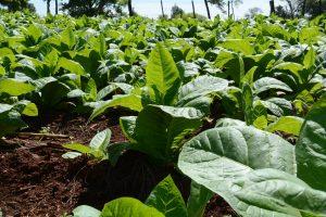 Acordaron un aumento del 59,95% para el precio del tabaco