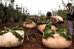 Pagan subsidio a tareferos